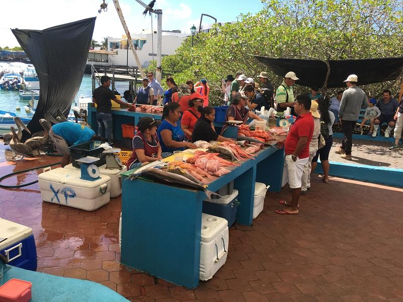 Fish market Galapagos
