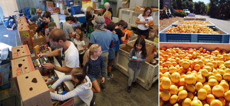 Santa Barbara County Foodbank Backyard Bounty