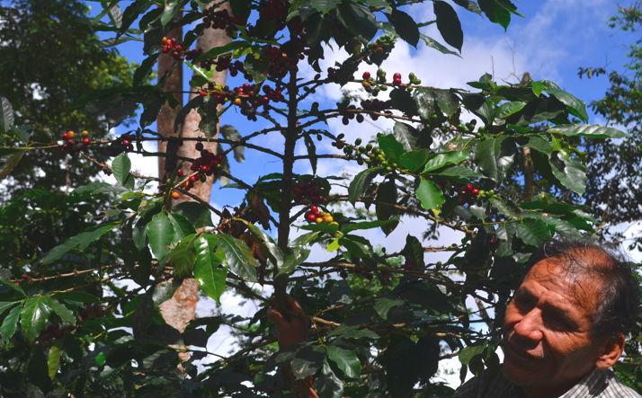 UCLA Anderson Conservation International Peru Coffee Grower Don Pablo