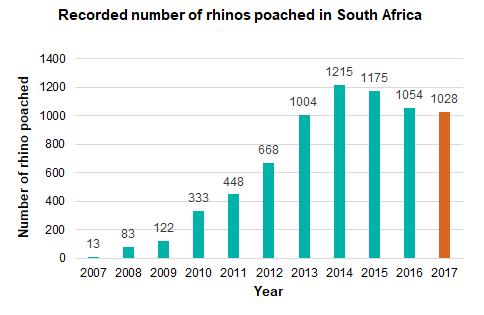Rhino poached