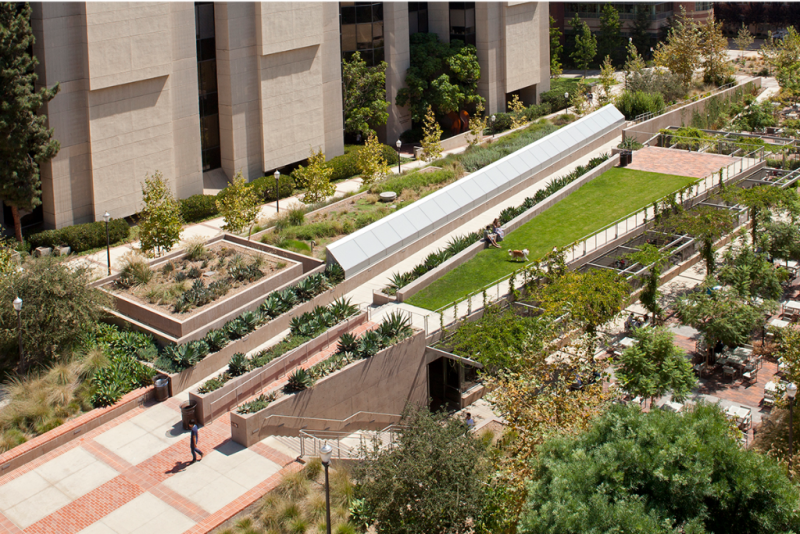 UCLA Court of Sciences